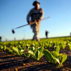 Corso Imprenditore Agricolo Professionale